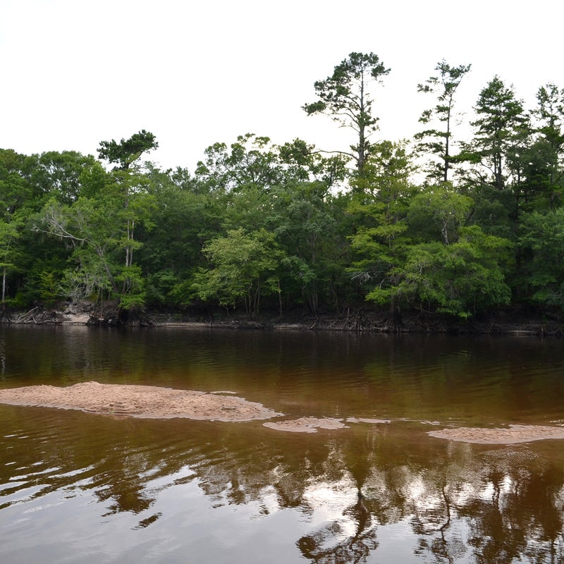Threat:  Excessive water withdrawalsAt risk:  Water supply, water quality, fish and wildlife habitat, recreationThe Edisto River is one of South Carolina's most popular rivers for paddling, fishing, and outdoor fun. It's also the state's most heavily used river for irrigation, and excessive agricultural water withdrawals are threatening water quality and the water supplies of other users. While the state's permitting process requires industrial and municipal water users to meet requirements to safeguard river health and clean water, large agribusinesses get a pass. The South Carolina House of Representatives has an opportunity to  pass a law, H.3564, this year to end this exemption so that the Edisto—and all of the state's rivers—can continue to provide sustainable water supplies while supporting river health and recreation.