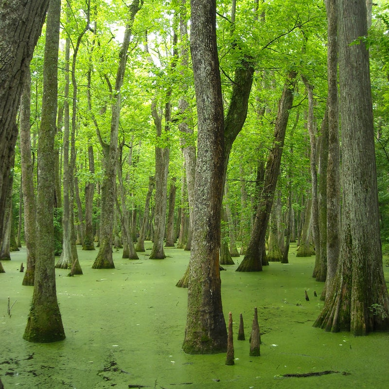 Threat:  New damAt risk: Healthy wetlands, fish and wildlife habitatThe Pearl River runs through Central Mississippi and supports vital oyster reefs and marsh habitat in the Mississippi Sound. Coastal wetlands and commercial fisheries depend on the Pearl River's flows, but the river's health has been compromised by the Barnett Dam north of Jackson, Mississippi. Now, a new dam is proposed for the Pearl that would cause additional harm to river health, wetlands, and fish and wildlife habitat.