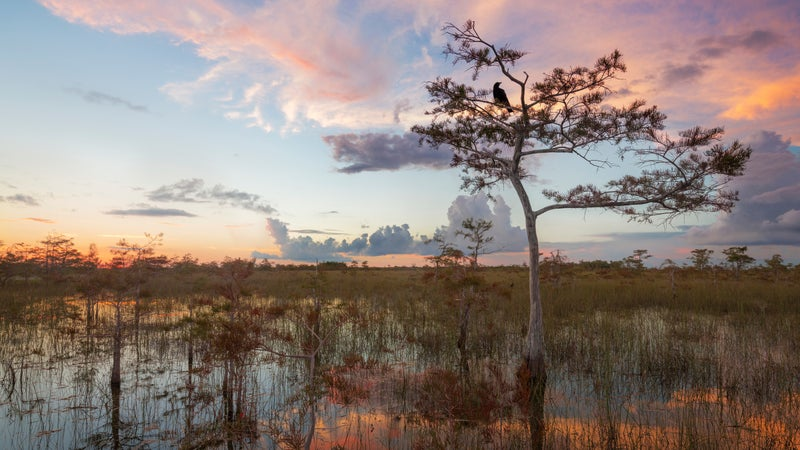 Sunset over the Everglades.