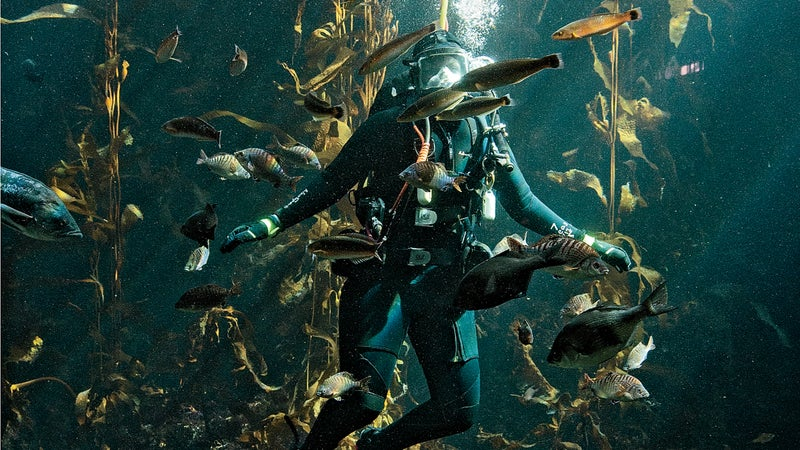 Monterey Bay Aquarium's Jennifer Dianto Kemmerly.