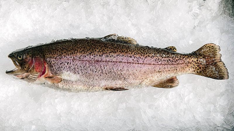A rainbow trout raised on a vegan diet.