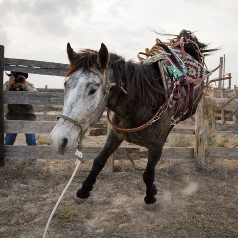 """Four friends bring the task of western frontiersmen—adopting, training, and riding 16 wild horses from Mexico to Canada—into the 21st century. """"Things are going to go wrong,"""" says rider Ben Thamer, and he is right. These animals are known to be unpredictable, but the riders are sending a message about the real difficulties of mustangs in the modern world: decreasing wild lands for which the horses are perfectly suited, and an astonishing number of wild horses that are currently languishing in government holding facilities.   Watch the trailer."""