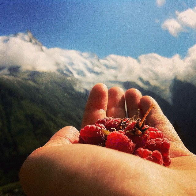 @run_kels_run: Berry gathering and flower picking
