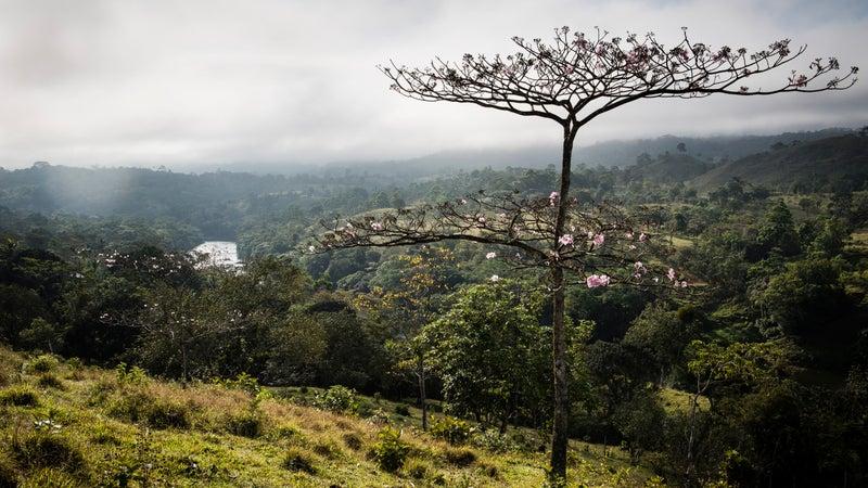 A river valley near Santo Tomás.