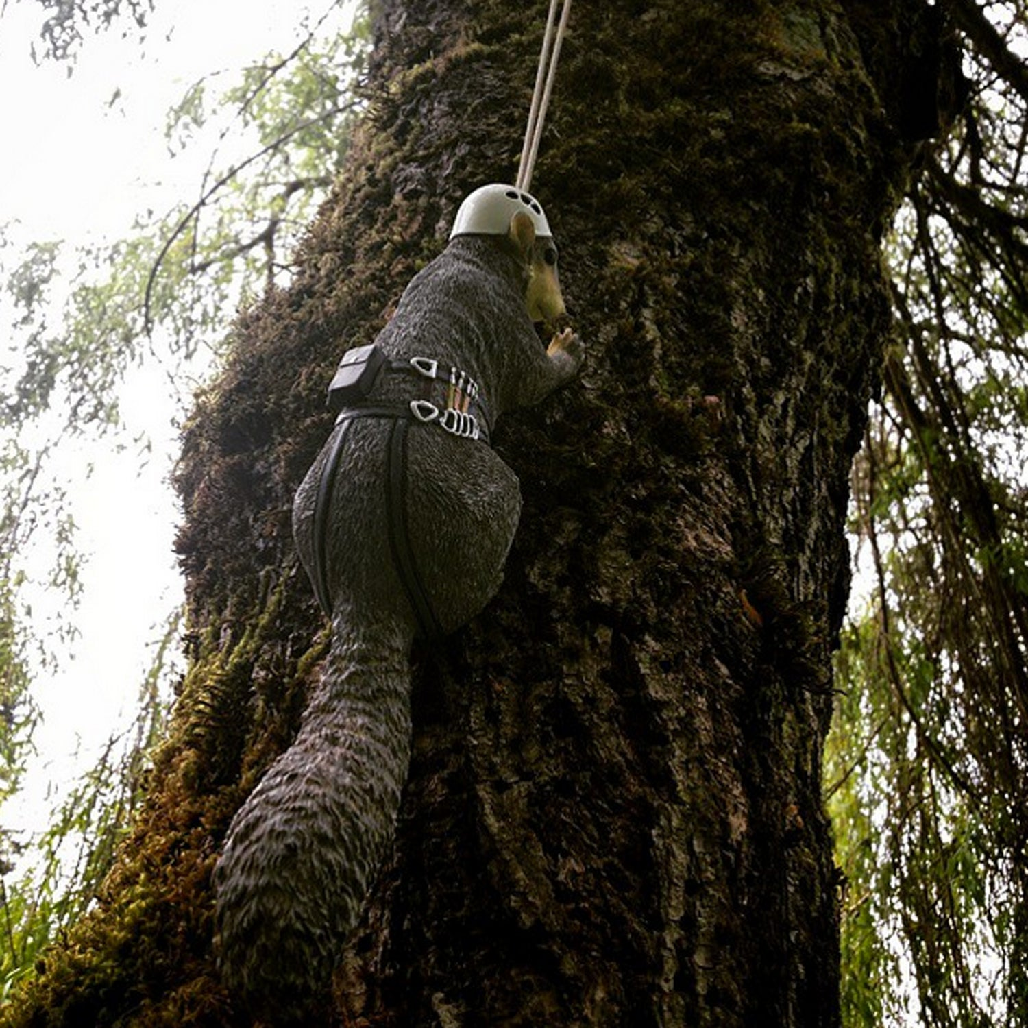 Because squirrels need climbing gear.....