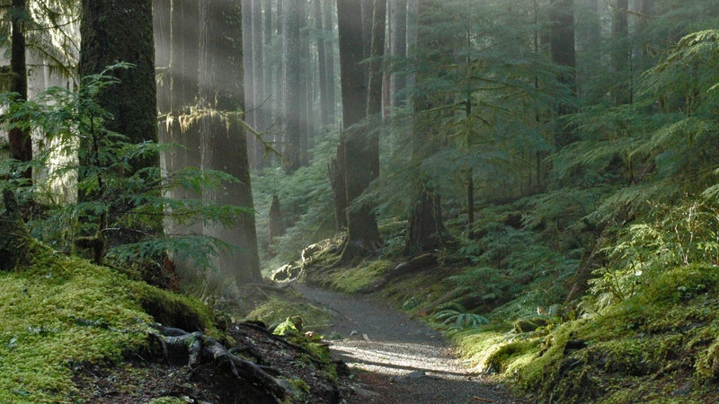 A quiet trail in Olympic National Park.