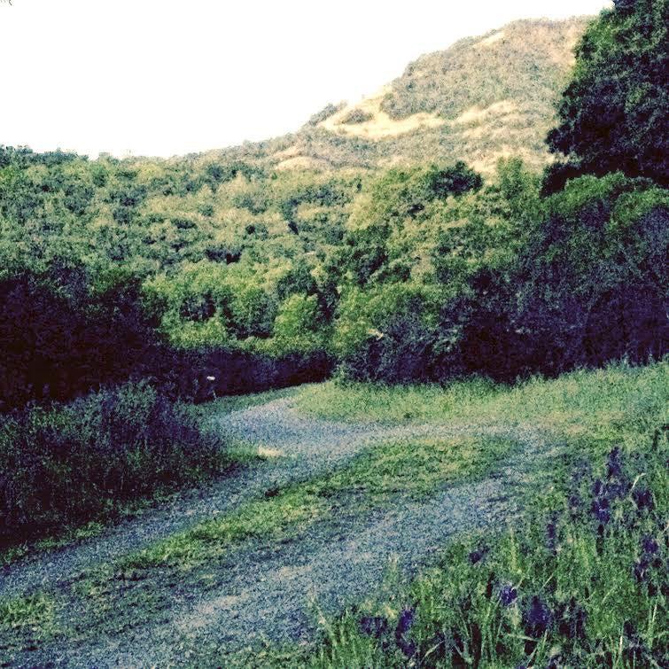 Krause's spot in the Mayacamas Mountains.