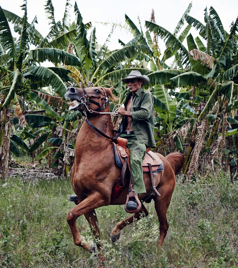 A farmer and his horse surveying a banana plantation owned by the government.