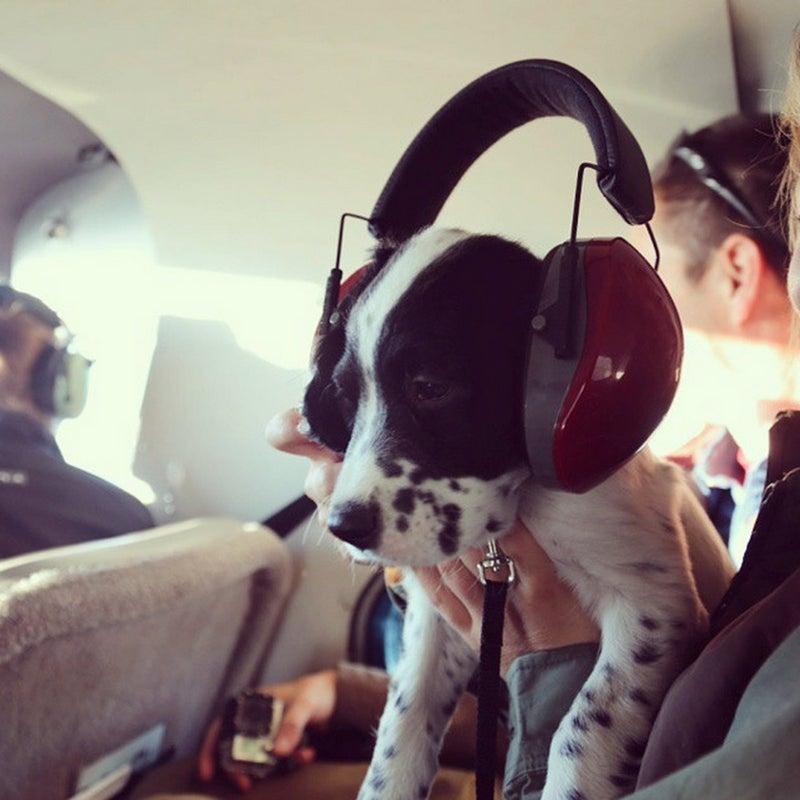 @cunningham_christine: Colt's first ride in a bush plane #birddog