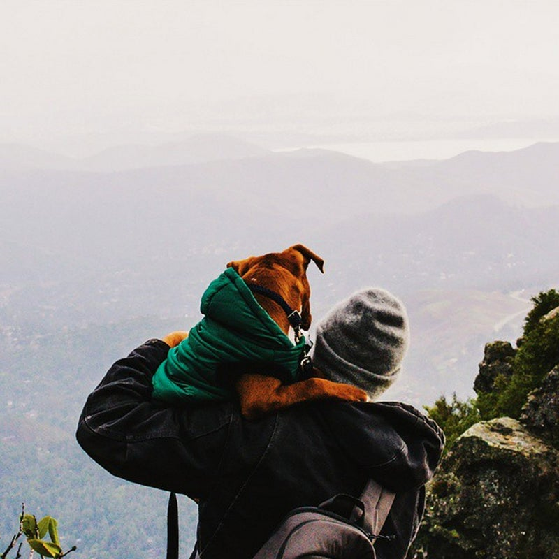 @j_watson11: I think he likes me...hanging with Moose up on #mttam with @speakingofjulia ...no dogs were harmed.