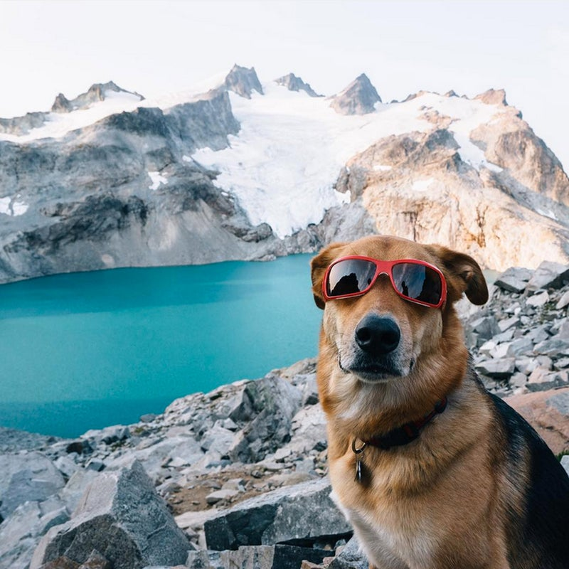 """Every year we ask our Instagram followers to share the best shots of their number one adventure buddy. As our audience has grown, so has the quality of replies. Big or small, these furry friends prove that when it comes time to hit the trail, the lake, the slopes, or wherever you get outside, dogs cannot be beat. Here are 20 of our favorites. Photo - @sam__davis: """"This guy thinks #nationaldogday should be a federally recognized holiday... Also, our vet recommended that he wears sunglasses on snowfields and glaciers lol #dieseltheadventuredog"""""""