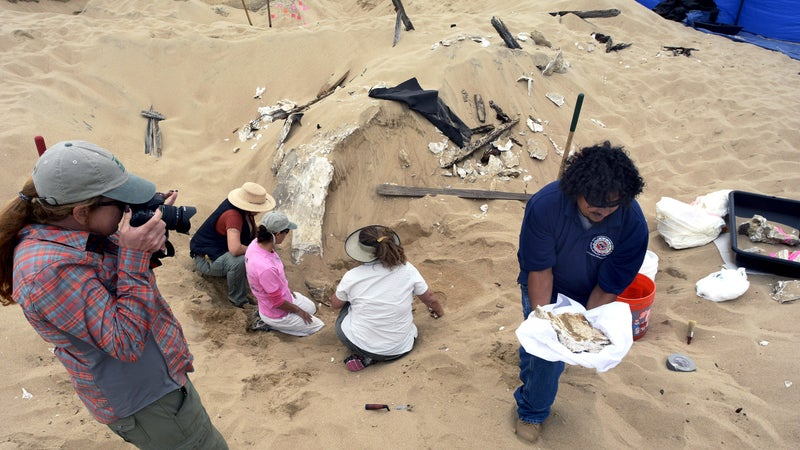 In October 2014, archeologists preserve decaying remains from wind-blown sand at Guadalupe Dunes.