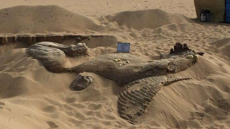 The sphinx before excavation.
