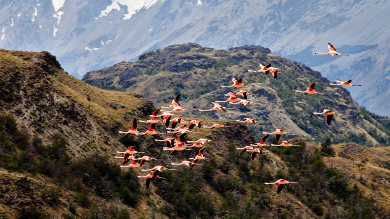 Kristine Tompkins plans to create six more national parks, including one from holdings in Chile's Chacabuco Valley (pictured).