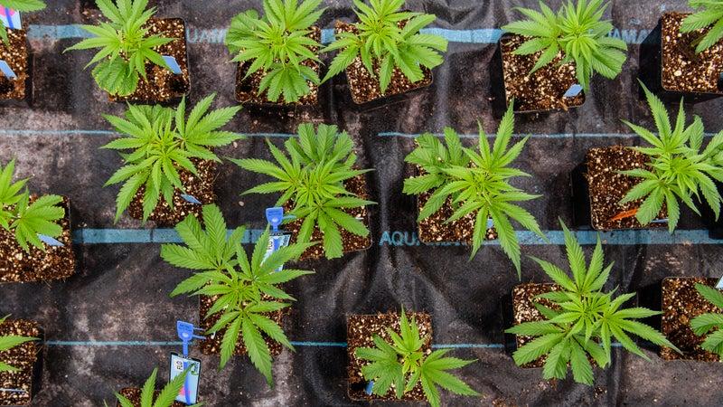 Seedling plants.