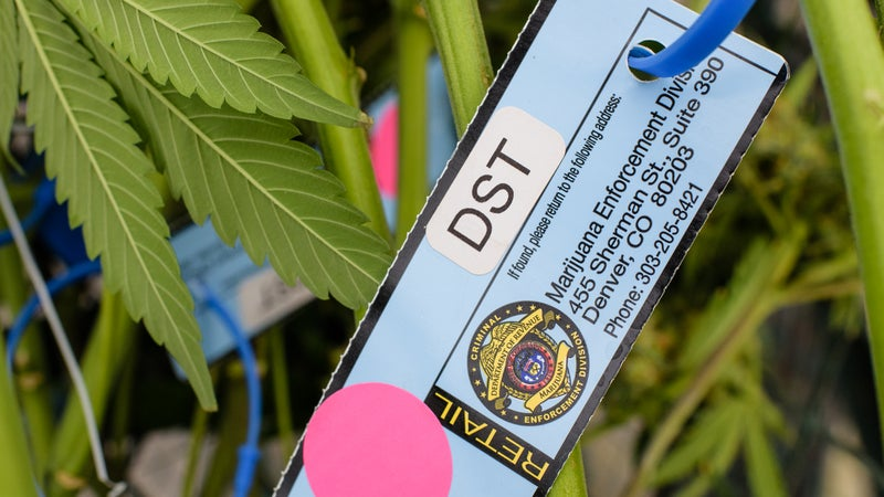 Every plant gets a tagged when it reaches eight inches tall, to be tracked by the Marijuana Enforcement Division of the Department of Revenue.