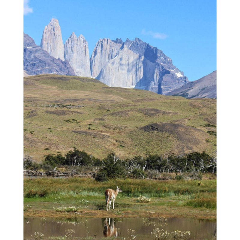 @explorin_oren: No photo can truly capture everything there is in Torres Del Paine National Park, but this photo was the closest I got. Anyone who likes hiking and the outdoors needs to visit this area. From the stunning rock formations to the rolling hills to the wildlife, there really is nothing that beats Patagonia. The landscape (and weather) changes every hour as you walk through the park, and the trek is worth every last minute. I promise, you won't want to leave.