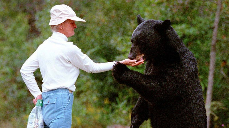 Before her death, Grayson was friendly with nearly 20 local bears and could even feed them by hand.