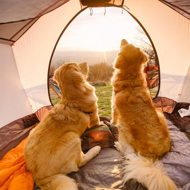 @Samanthabrookephoto: My sunset view. #campingwithdogs