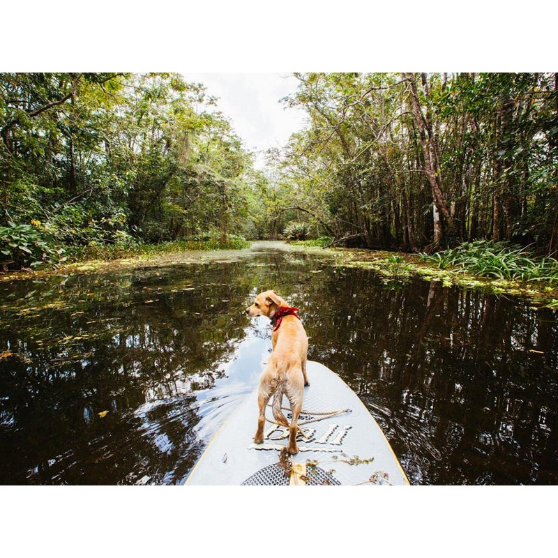 @Thesaltynut: This is my favorite way to explore when we drop our anchor in these wild places. I am on crocodile watch as we wander through the labyrinth of waterways here in Cayo Quemado Guatemala.