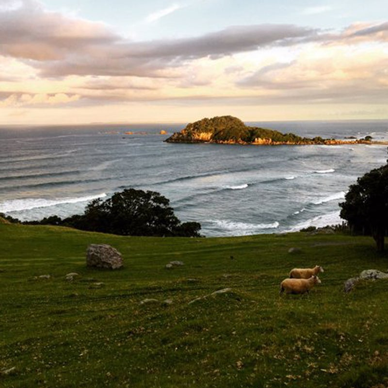 """""""Running hills is much more tolerable with this view (plus sheep spectators!) #SoultoSole"""""""