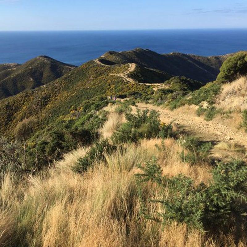 """Favorite running track: red rocks trail in Wellington, New Zealand #SoultoSole"""