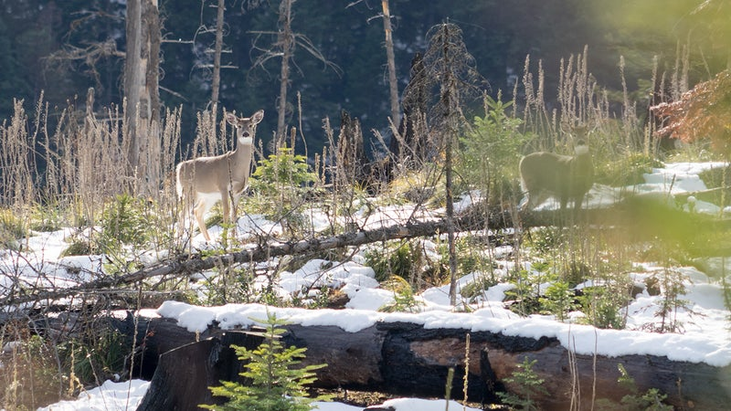 Hunting helps Idaho manage its large population of whitetail deer, keeping the species within the carrying capacity of the state's environment. It also pays for conservation and management efforts both here, and throughout the country. Hunting is, by far, the single largest economic contributor to conservation there is.
