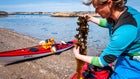 Catxalot is out to make seaweed the next foraging craze.