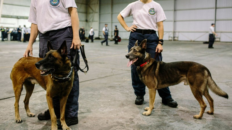 Task force members and their dogs wait for an assignment.