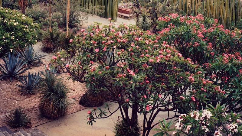 Oaxaca's botanical garden.