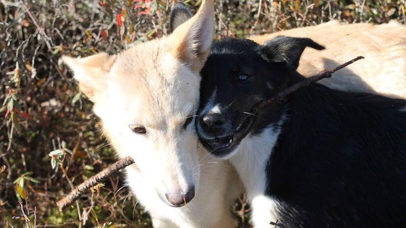Spike and Xander share a stick.