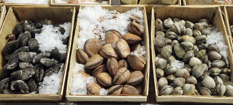 Display of shellfish