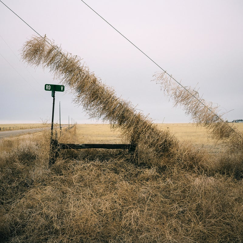 These power lines were in Boone, Colorado. Much of eastern Colorado is rural plains land, and I would drive through it on my way to take other pictures. I found this scene one day and imagined what it must have taken for the tumbleweeds to climb as high as they did.
