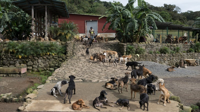The compound has the feel of a crowded, open-air bus terminal where all passengers are dogs.