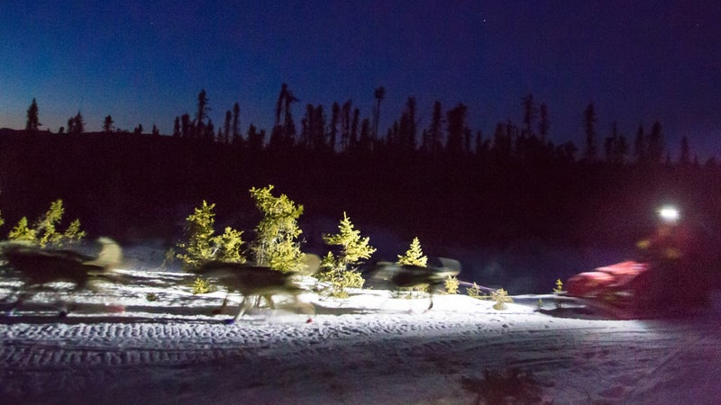 A sled dog team races through the night to make it to the next checkpoint.