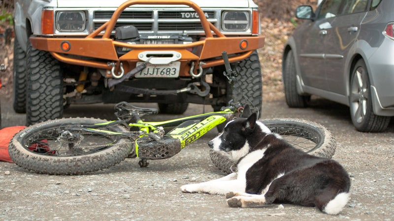 Have an athletic dog (or three), that you need to provide exercise for? Nothing wears a pooch out like chasing an e-MTB for four hours.