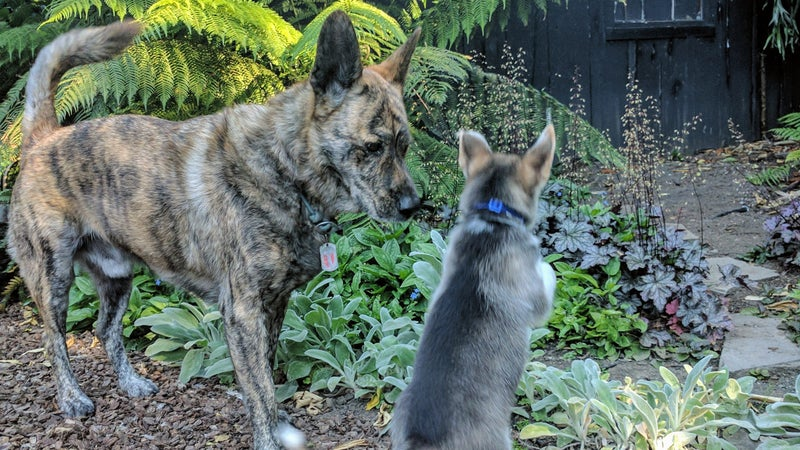 Wiley is still pretty skeptical about this puppy business. I figure it'll take a week or two for him to come around, then the two will be best friends.