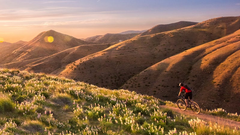 Mountain biking through the lupin in the Boise foothills.