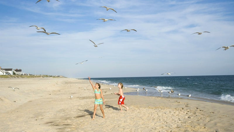 Playing with gulls on Cooper's Beach.