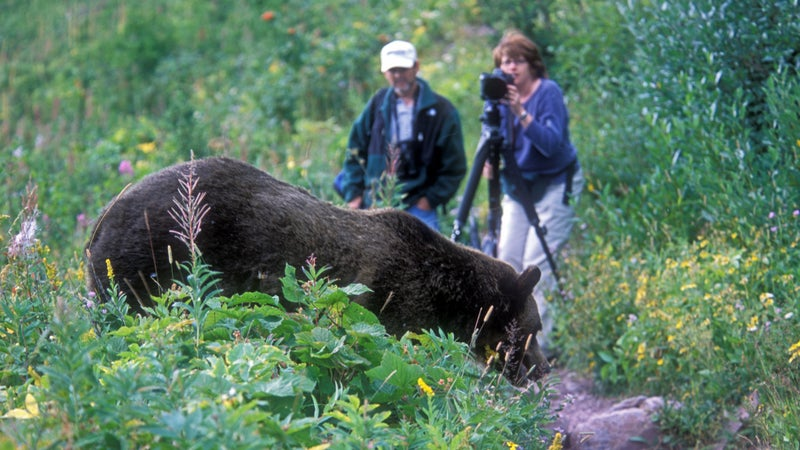 """Gildart photographed this couple encountering a bear in Glacier in 2002. """"Obviously this bear was 'conditioned' to people,"""" he says."""