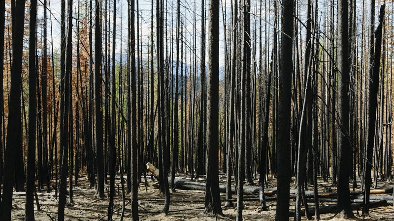 The Pagami Creek Fire torched 70,000 acres in less than four hours.