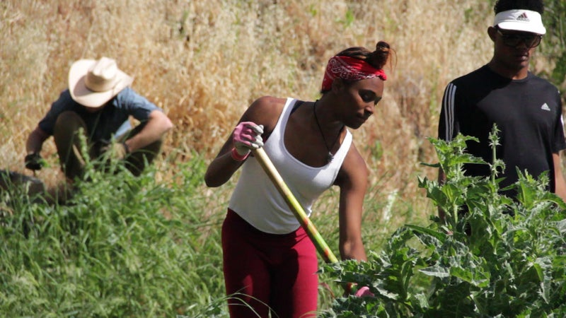 Natalie and DeShon pull thistle. It's a constant battle trying to fight the spread of invasive flora on the island.