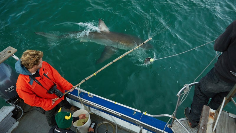 Nathan testing a batch of Sharkchemz near Seal Island.