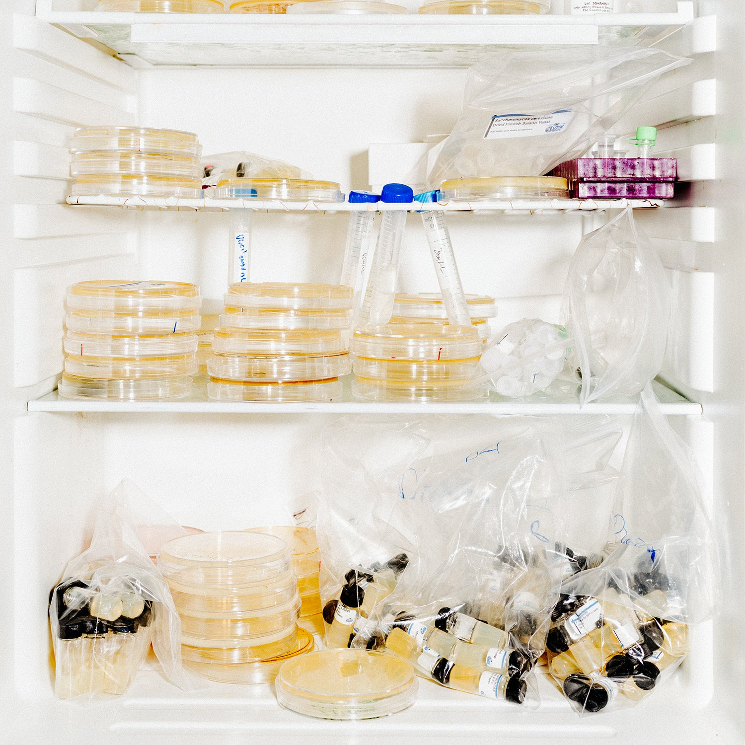 Agar plates and vials of microbes at the ODIN lab.