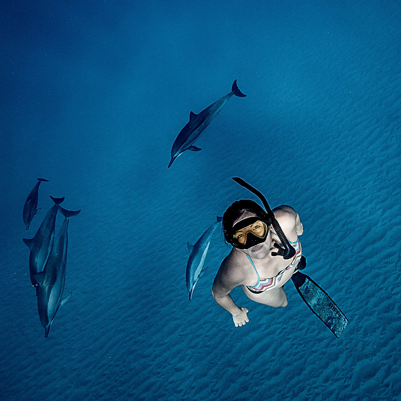 Swimming with dolphins in Oahu.