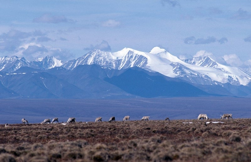 Brooks Range in the Arctic National Wildlife Refuge (ANWR) where Congress may allow drilling.
