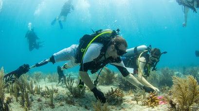 Mote volunteers planted 500 Stagorn Coral on Hope Reef in June 2017.