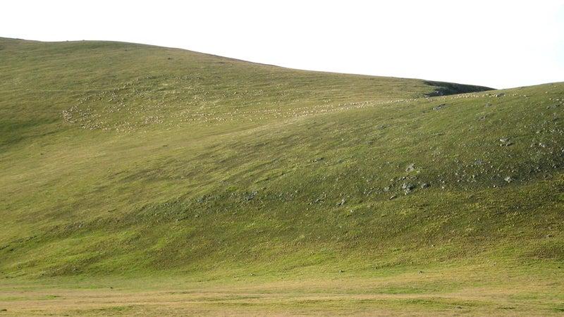 Look closely: mountain maggots (i.e. sheep) on Snow Mesa, along the Colorado Trail