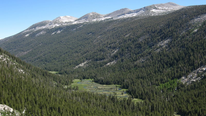 Lyell Canyon, one of four epicenters of bear activity in Yosemite