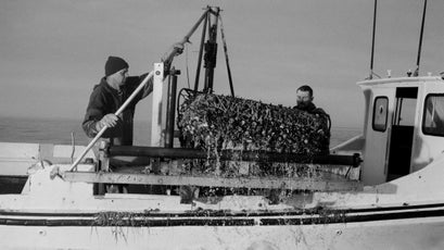 Dredging oysters